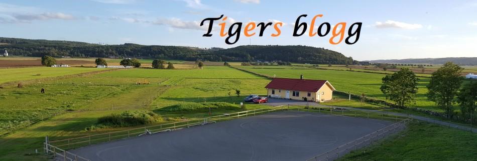 Tigers blogg